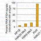 Иванова М.Е. Ядерная аггрегация генов обонятельных рецепторов управляет их моногенной экспрессией (Nuclear Aggregation of Olfactory Receptor Genes Governs Their Monogenic Expression), www.organum-visus.com, пояснения в тексте.